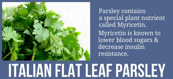 Italian_Flat_Leaf_Parsley