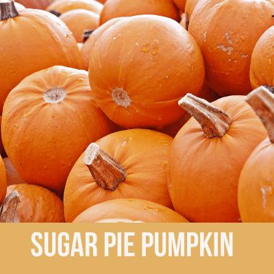 Sugar Pie Pumpkin Makes Crustless Pumpkin Pie